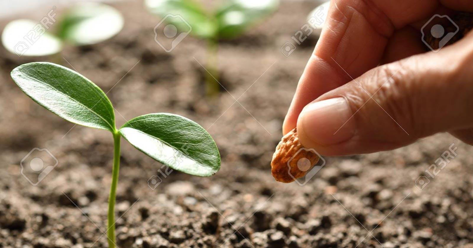 Seed MongoDB (mongoose-seed)