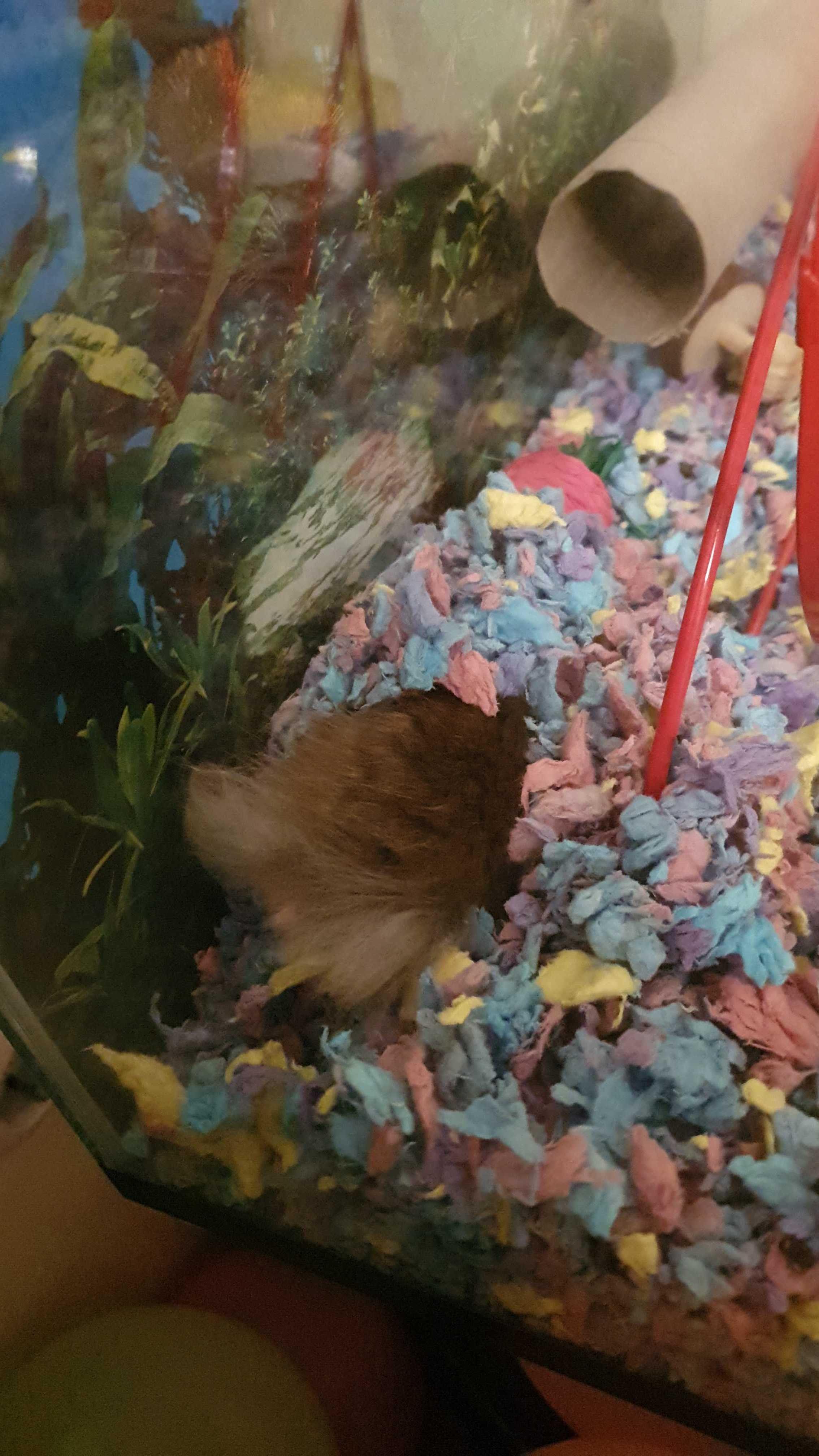 Hamster ass