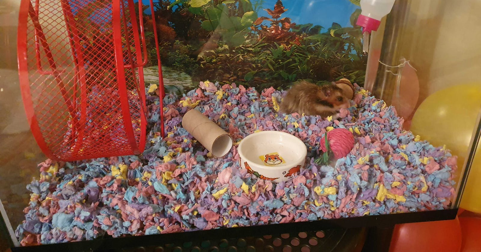 Lessons Learned From My Hamster