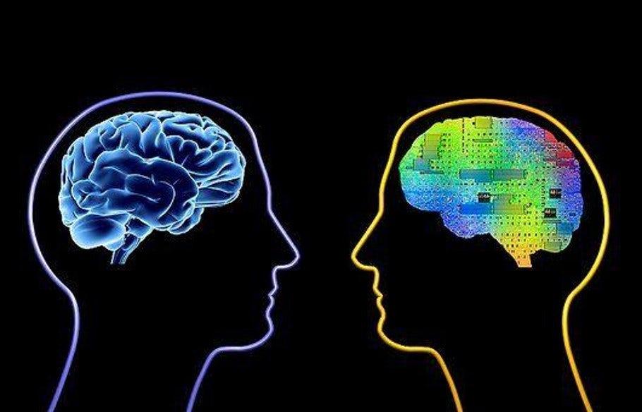 NN and the Brain Illustration.jpeg