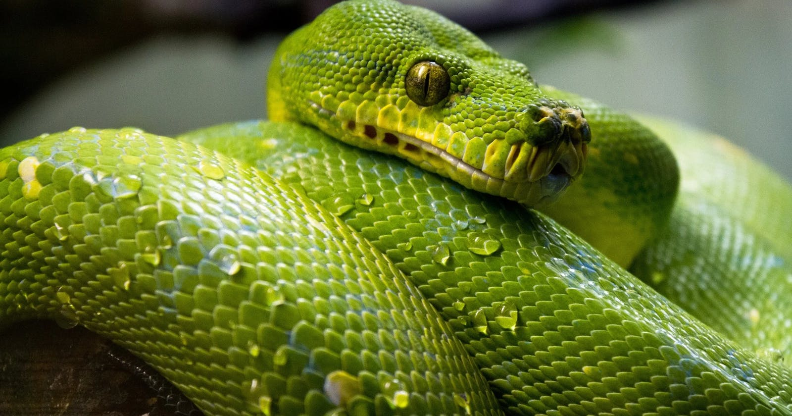 So you want to be a Python expert?