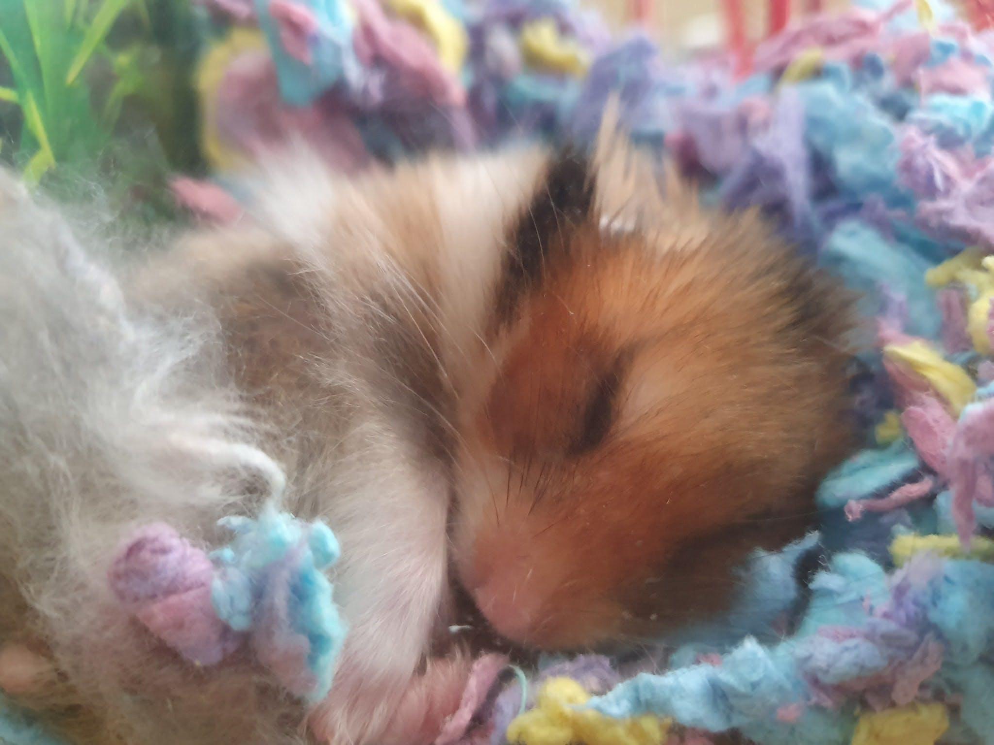 Susko sleeping
