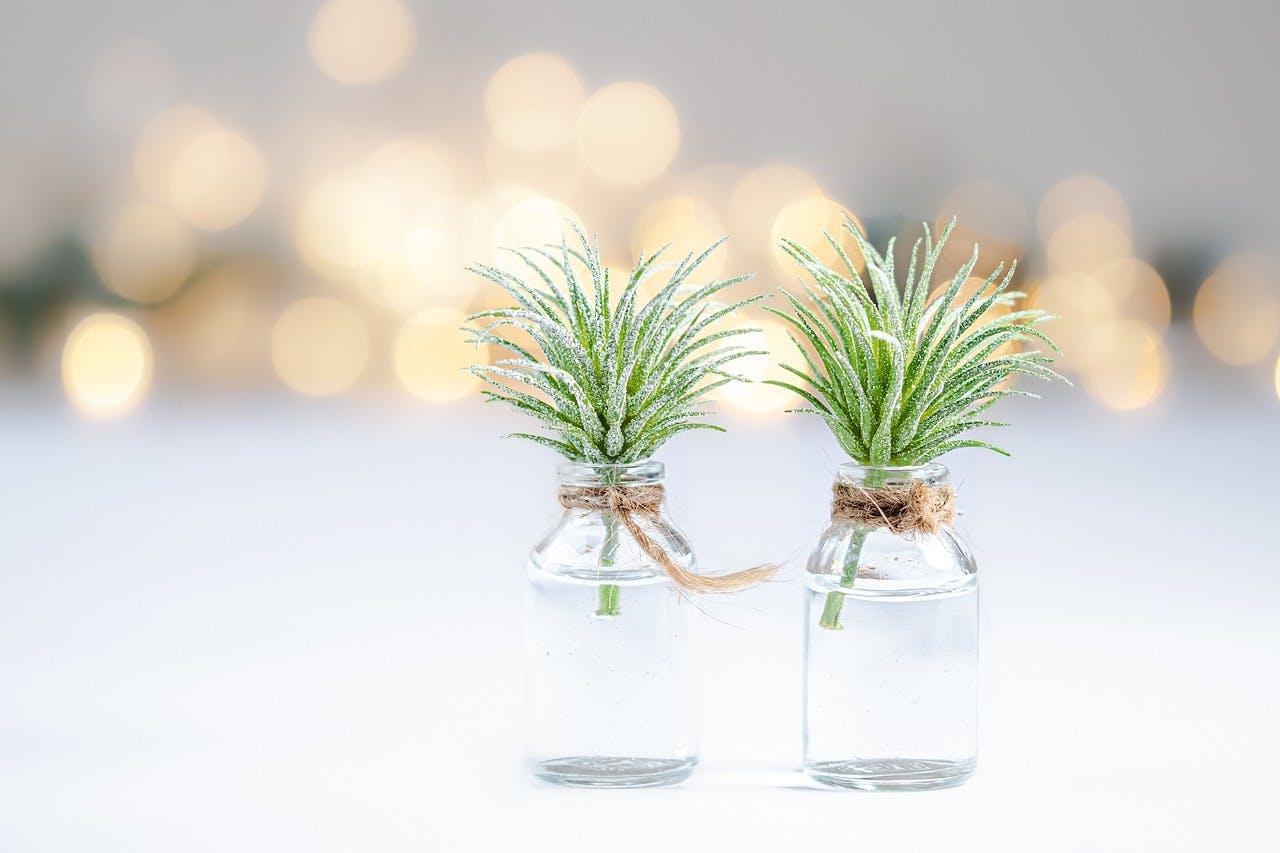 plants-4572694_1280.jpg