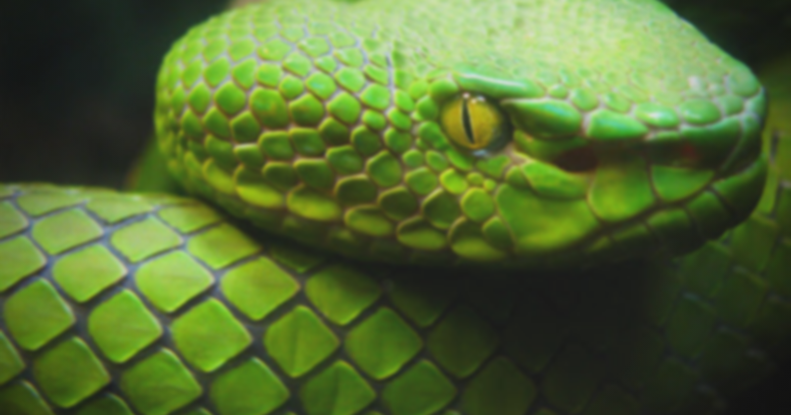 7 Python Tricks And Tips You Must Know