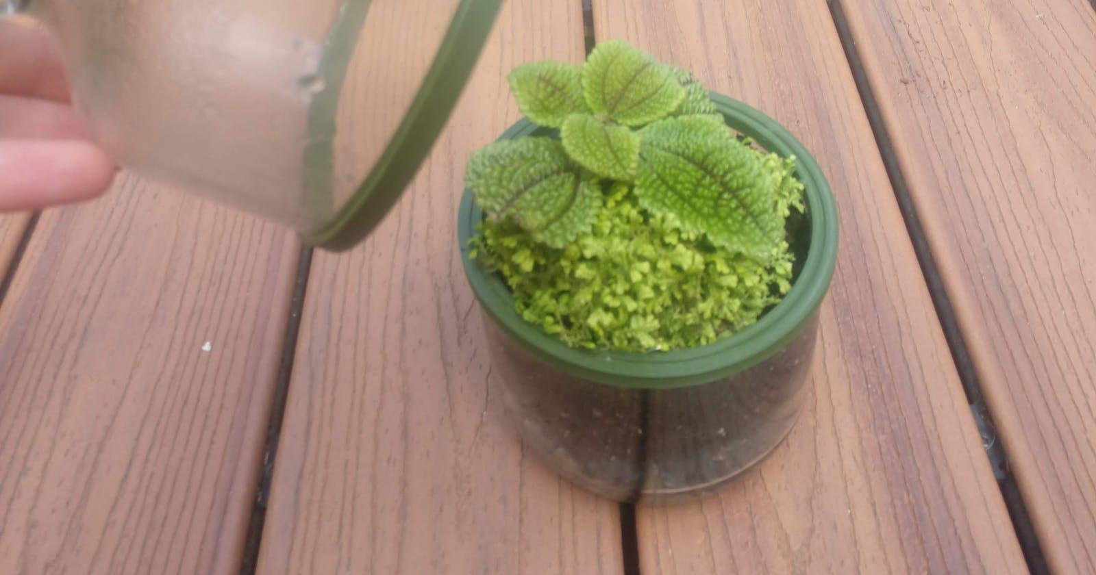 Update: Plants in a bottle