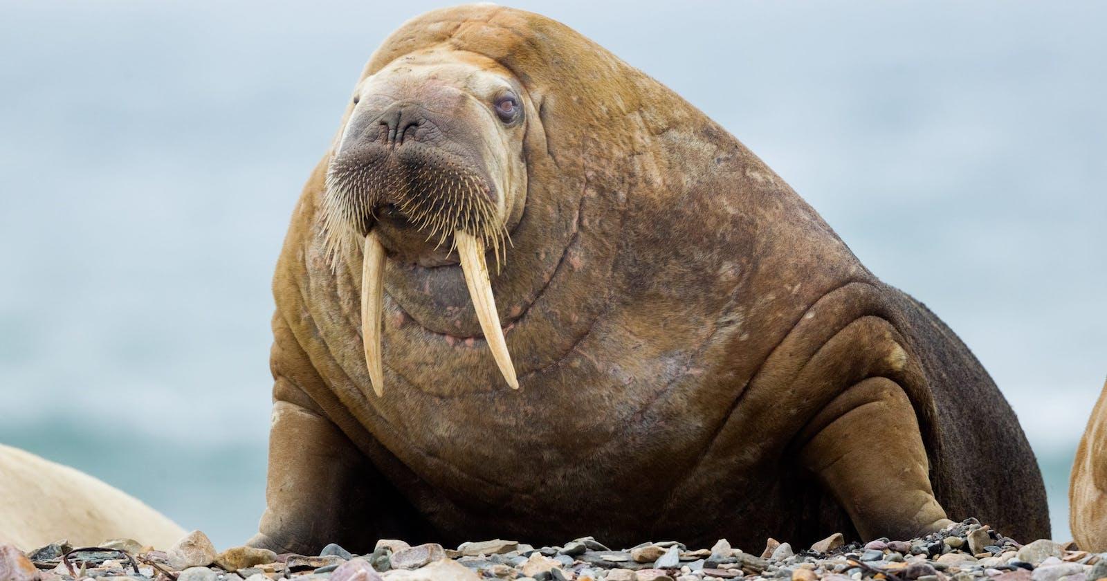 Python's New Walrus Operator