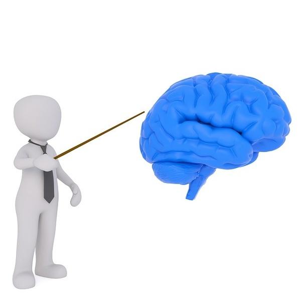 brain toy.jpeg