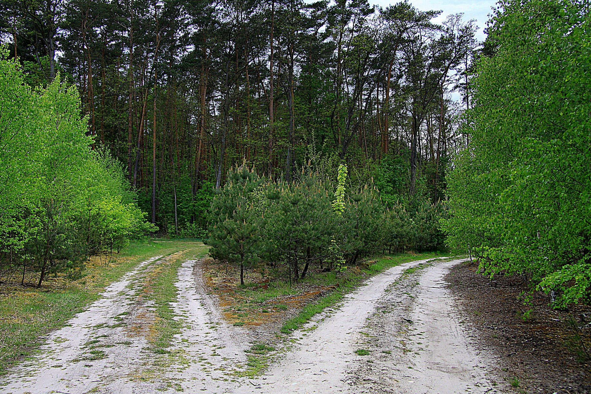 forest-road-5228673_1920.jpg