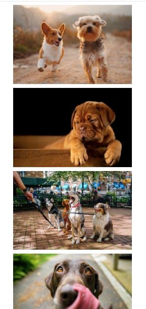 dog-pic.png