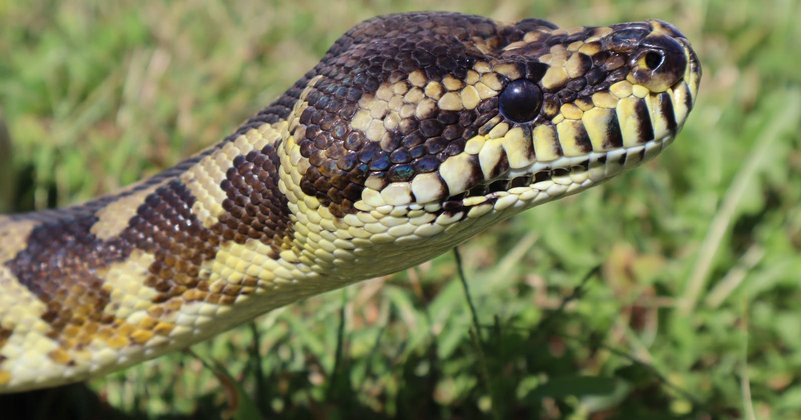 10 powerful built-in functions from the Python standard library