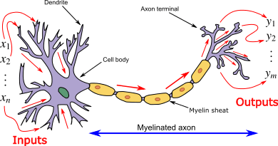 Neuron3.png