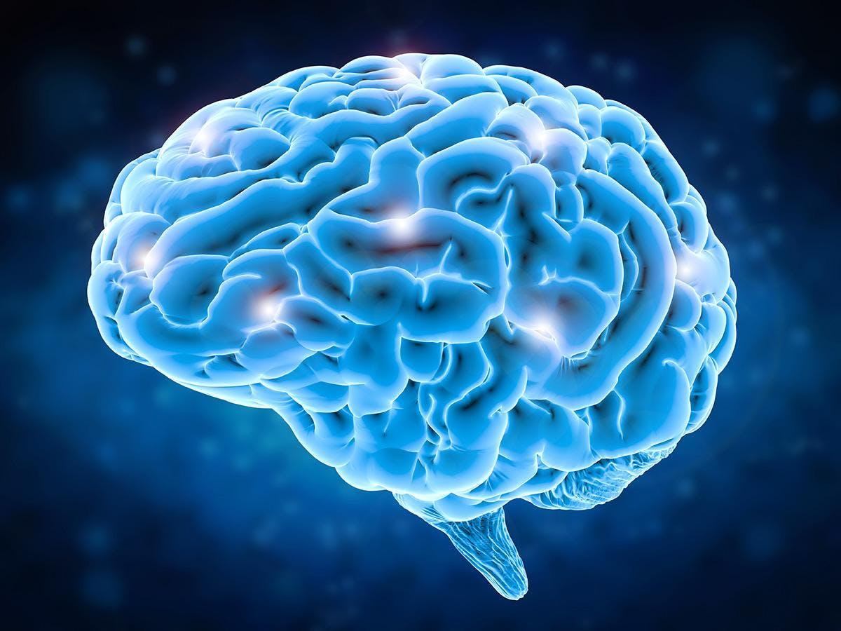 BMI_brain.jpeg