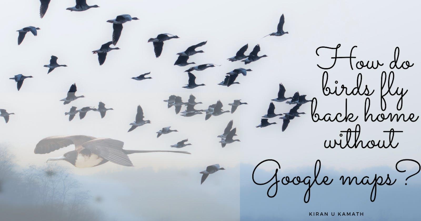 How do birds fly back home?