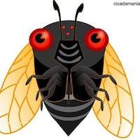 cicada's photo