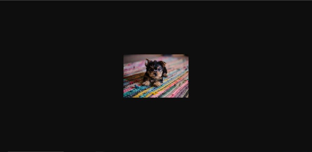 puppyresize-1024x501.jpeg