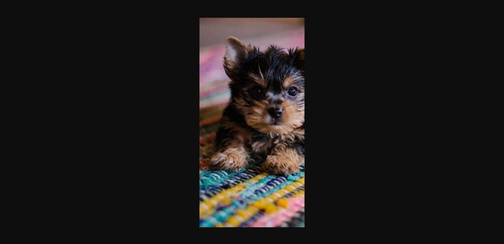 puppysmartcrop-1024x497.jpeg