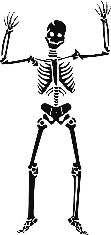 purepng.com-skeleton-skullskeletonstructureexoskeletonskeletonsskullsclipart-1421526967818zh0sl.png