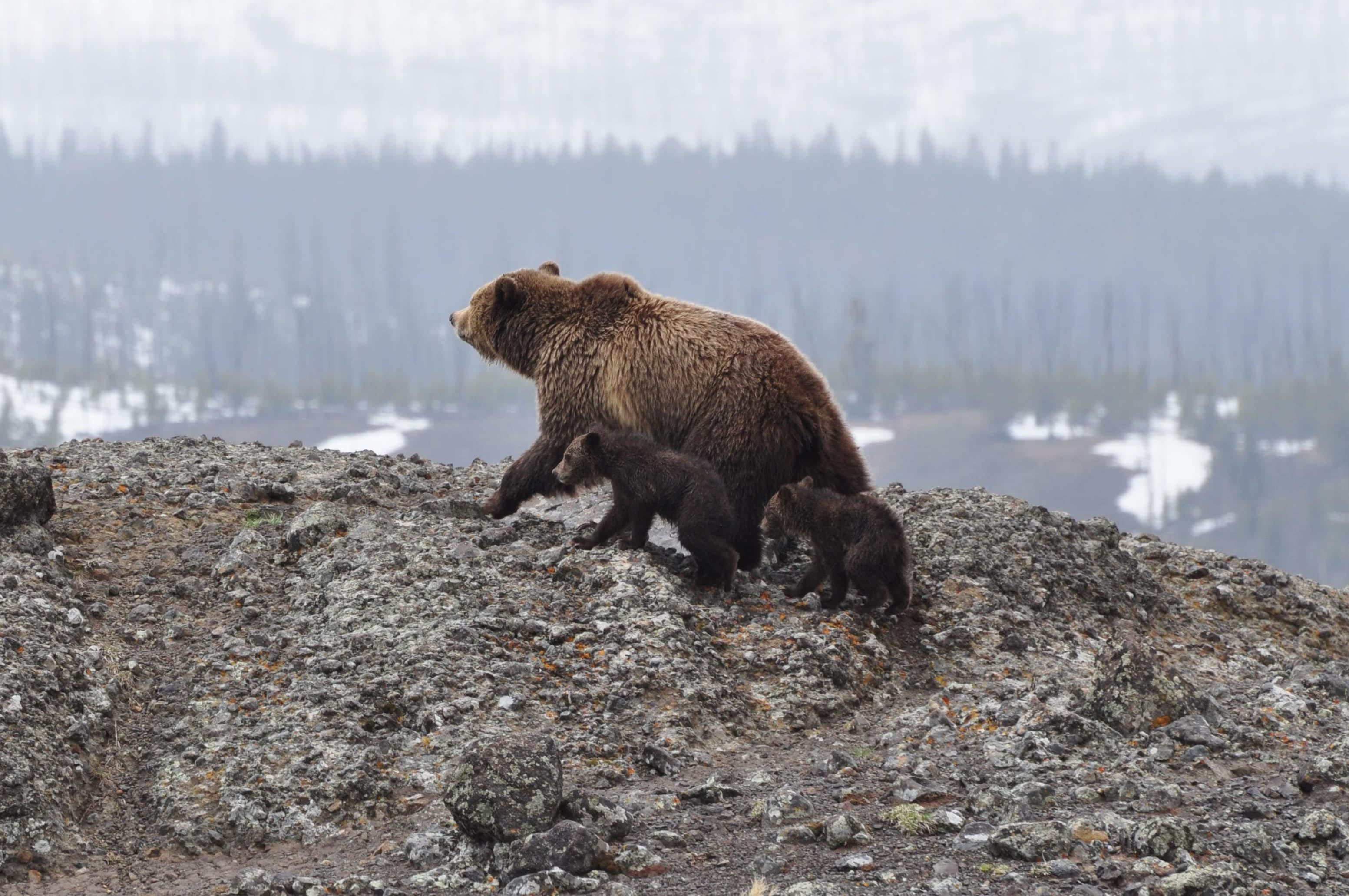 bears_cropped_s.jpg