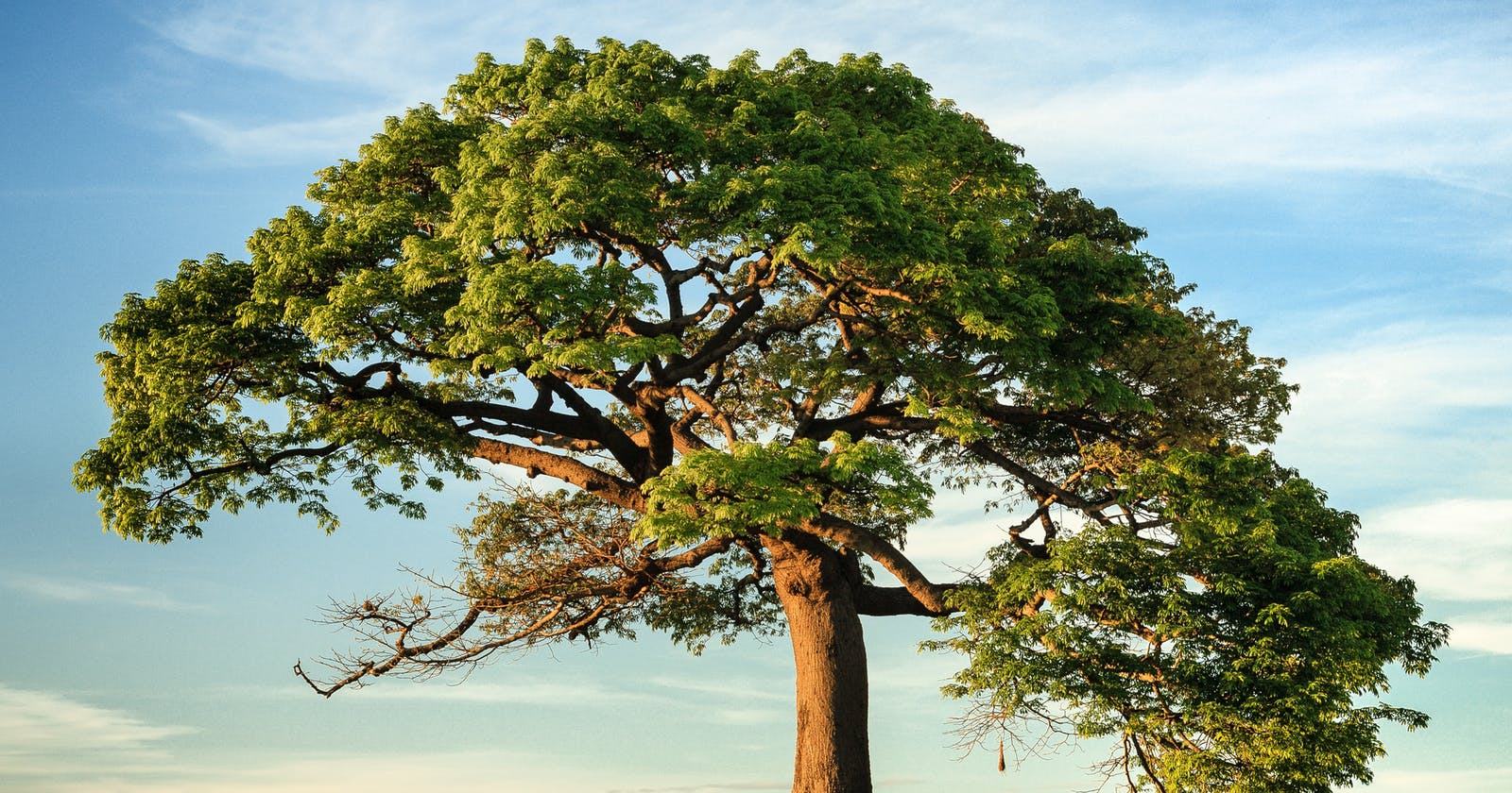Tree data structure in JavaScript
