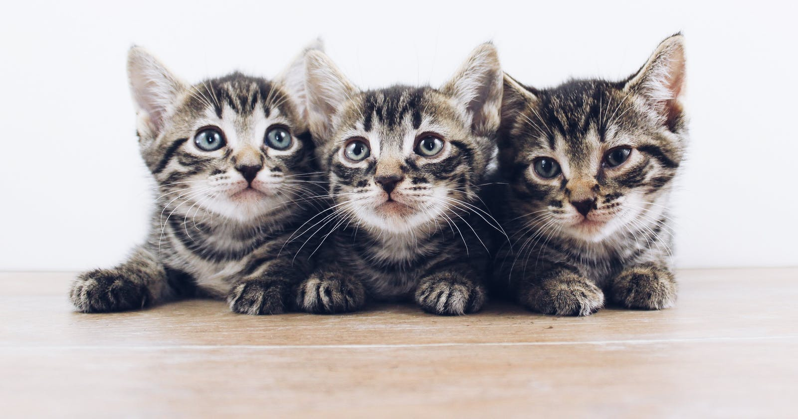 I Accidentally Wrote A 😹Cat-Genetics 🧬 Algorithm While Following My Python Beginner Course